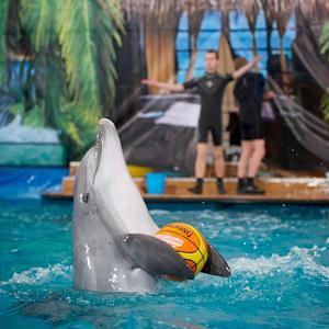 Дельфинарии, океанариумы Итатки