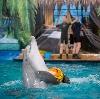 Дельфинарии, океанариумы в Итатке